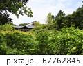 東福寺  新緑  蓮 67762845