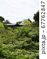 東福寺  新緑  蓮 67762847
