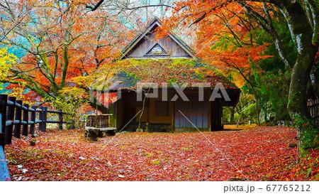 散策路沿いの赤いモミジの絨毯に建つ古民家 67765212