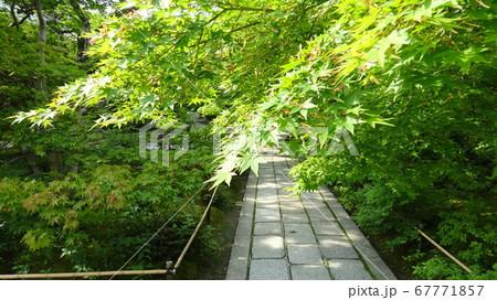 優しい光が当たって鮮やかな若葉が映える参道 67771857