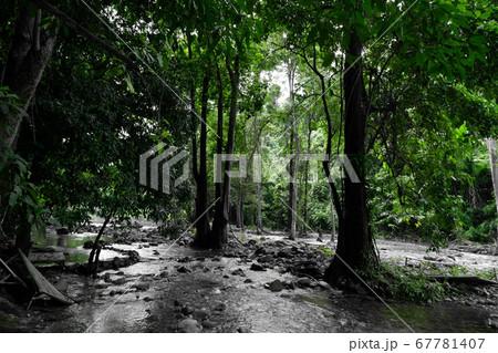 タイのキャンプ場*ナコンナーヨック 67781407