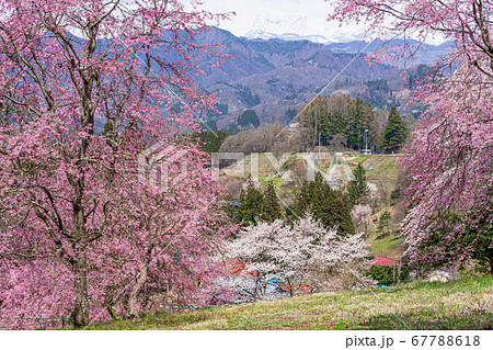 【長野県】小川村 番所の桜山と北アルプス 67788618
