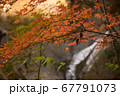 秋の太陽に照らされる紅葉と滝 67791073