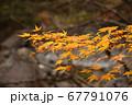 秋の太陽に照らされる紅葉と滝 67791076