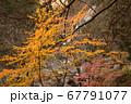 秋の太陽に照らされる紅葉と滝 67791077