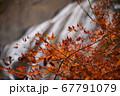 秋の太陽に照らされる紅葉と滝 67791079
