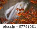 秋の太陽に照らされる紅葉と滝 67791081