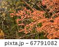 秋の太陽に照らされる紅葉と滝 67791082