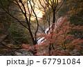 秋の太陽に照らされる紅葉と滝 67791084