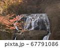 大迫力の滝と紅葉 67791086