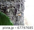 幼虫 67797685