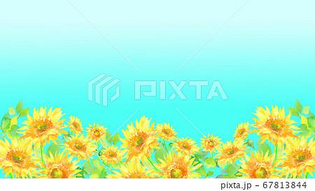 水彩で描いたひまわり畑のイラスト  67813844