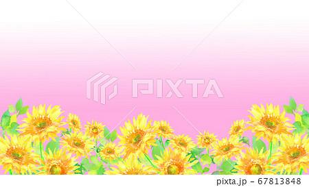 水彩で描いたひまわり畑のイラスト  67813848
