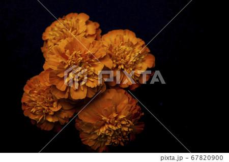 image of flower dark background  67820900