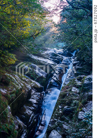 飛流落としの滝(2月)木漏れ日、屋久島白谷雲水峡の森 67827092