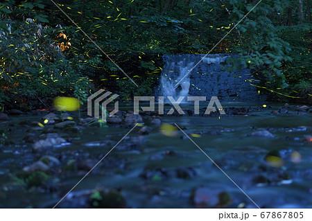西岡公園の水辺を舞うヘイケボタル 67867805