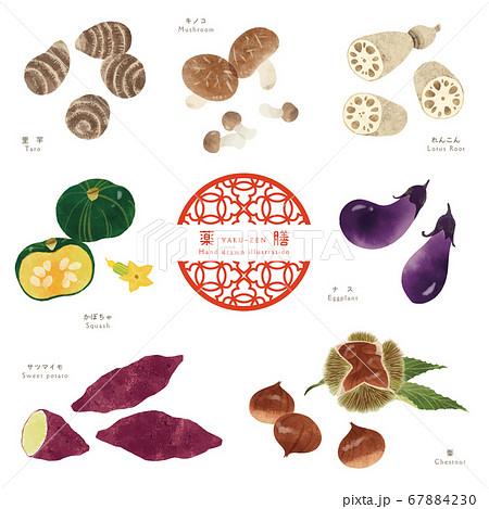 秋の薬膳-1/食材の手描きイラスト 67884230