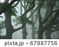 霧のブナ林 67887756