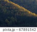 夕陽に染まる秋のカラマツ林の遠景 67891542