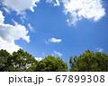 青空と樹木 67899308