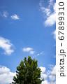 青空と樹木 67899310