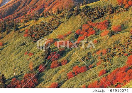 10月 渋峠からみた芳ヶ平湿原の紅葉 67910072