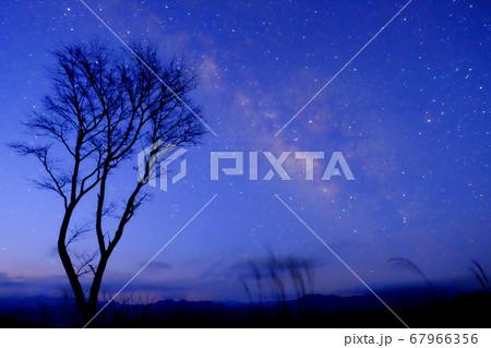 夜桜と天の川(奈良県宇陀郡曽爾村) 67966356