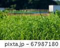草原と畑 67987180