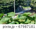 畑と道路のカーブを眺める 67987181
