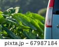 車のテールと美しい植物の光景 67987184