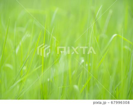夏の草原のクローズアップ写真 7月 67996308