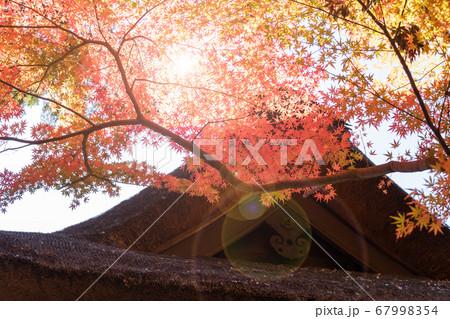 お寺の屋根と赤黄橙に染まった紅葉の葉 67998354