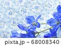 ブルー系の背景のデルフィニウムのクローズアップ 68008340