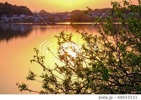 新緑と水上池の夕景(奈良県奈良市) 68033531