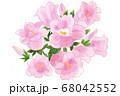 風鈴草 68042552