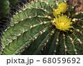 市川市の観賞植物園でサボテンの花が咲きました(2) 68059692