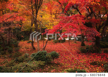 紅葉の絨毯(京都・圓光寺) 68078848