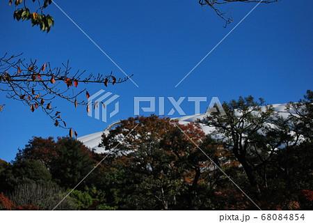 小石川後楽園から東京ドームの眺め 68084854
