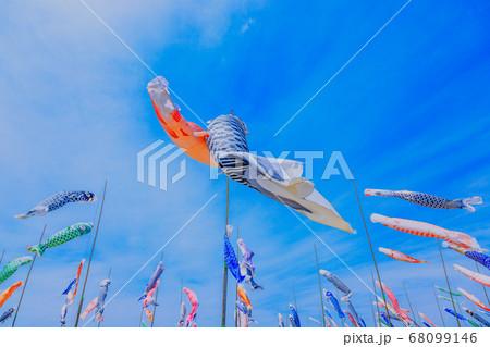 青空を泳ぐ鯉のぼり 68099146
