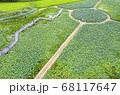 利川 風景 農園 68117647