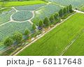 利川 景色 農園 68117648