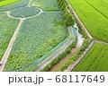 利川 景色 農園 68117649
