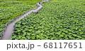 利川 風景 農園 68117651