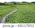 利川 風景 農園 68117652