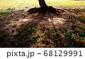 シルエットが印象的な木の根元 68129991
