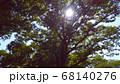 森の中の木漏れ日 68140276