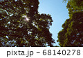 太陽と空と大きな木 68140278