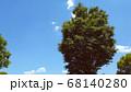 樹木と青空 68140280