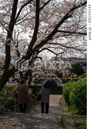 大阪池田・桜の咲く水月公園の風景 68144144