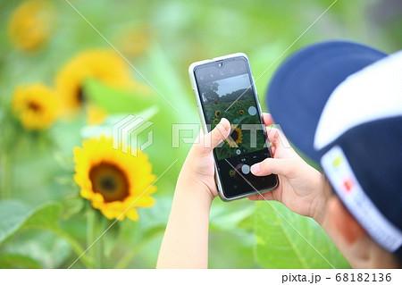 写真教室でヒマワリを撮影する女の子 68182136